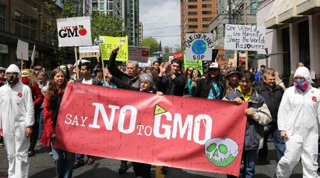 Anti-GM protestors