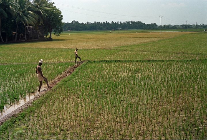 Can Agri-Startups Solve The Problems Of  Farmers In The Country?
