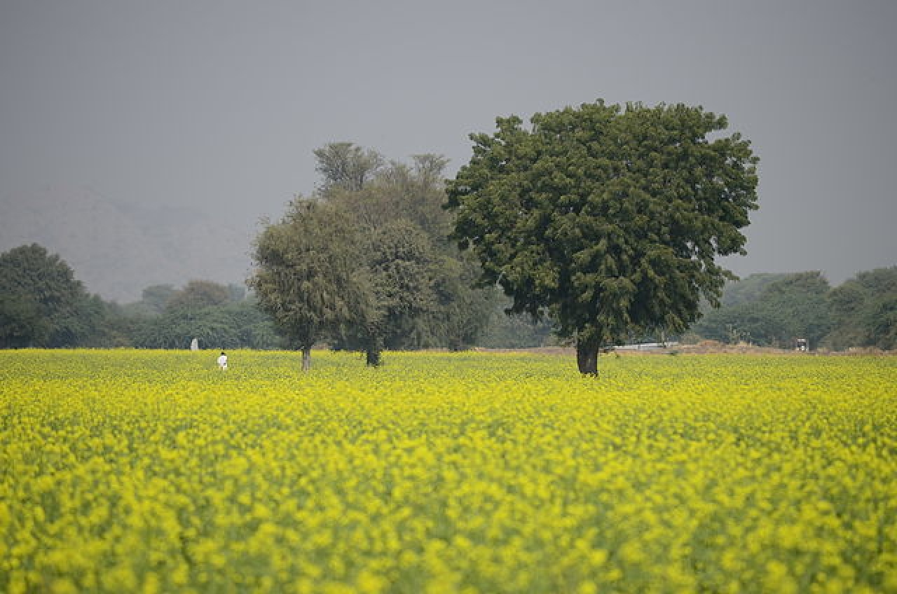 A farm in Ranakpuri, Rajasthan (Ana Raquel S. Hernandes/Wikimedia Commons)