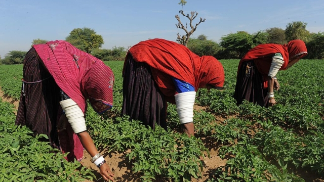 GRAM 2016: A Rajasthan Showcase For Best Practices In Agriculture