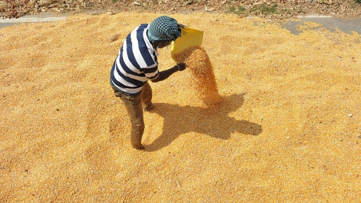 Modi Government's Farm Support Plan Will Have Minimal Impact On Exchequer, Inflation: SBI Ecowrap