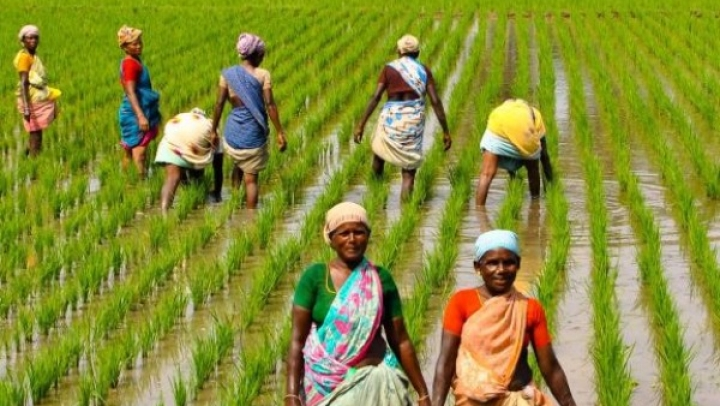 How Indian Agriculture Can Move Beyond The Boom-Bust Cycles