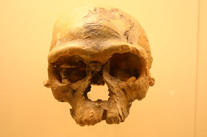 Human Story Retold: The Discovery Of Oldest Bones Challenges East Africa Theory