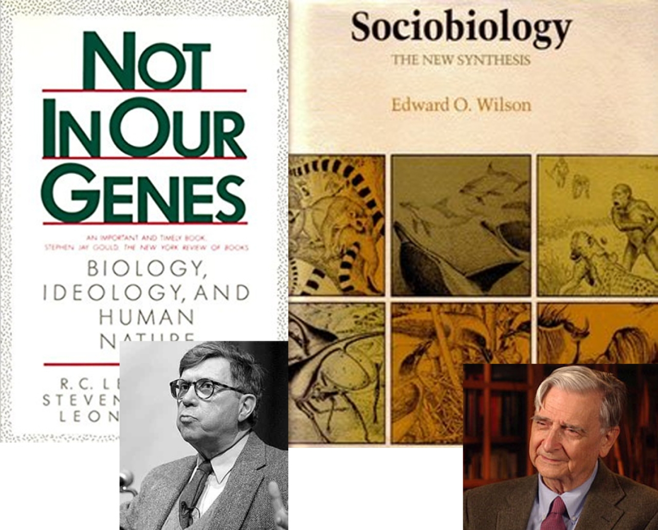Ideological war on biology: Lewontin (left) attacked sociobiology for political and ideological reasons. Biologist E.O.Wilson (right) was targeted.