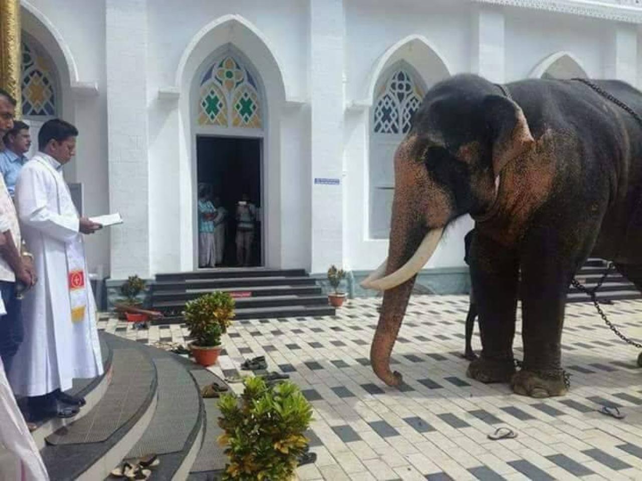 Baptising an elephant?