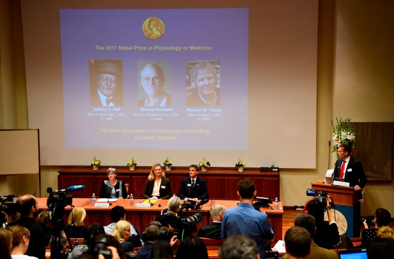 Winners of the 2017 Nobel Prize in physiology or medicine, from left, Jeffrey C Hall, Michael Rosbash and Michael W Young are pictured on a display during a press conference at the Karolinska Institute in Stockholm on 2 October. (JONATHAN NACKSTRAND/AFP/Getty Images)