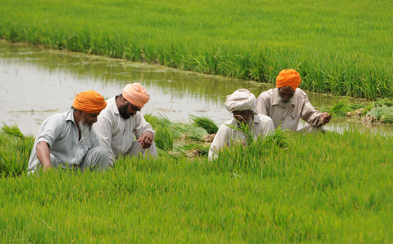 Farmers preparing paddy field near Patiala. (Bharat Bhushan/Hindustan Times via Getty Images)