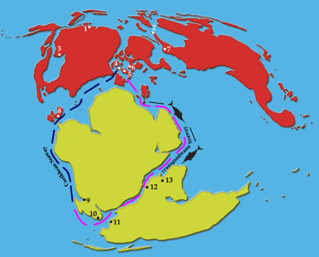 The inferred sea route along which faunal interchanges may have taken place between the western Tethys and the southern Indian Ocean is shown in magenta colour. Number 12 in the map is Madagascar and 13 is India. (Courtesy:  PLoS paper)