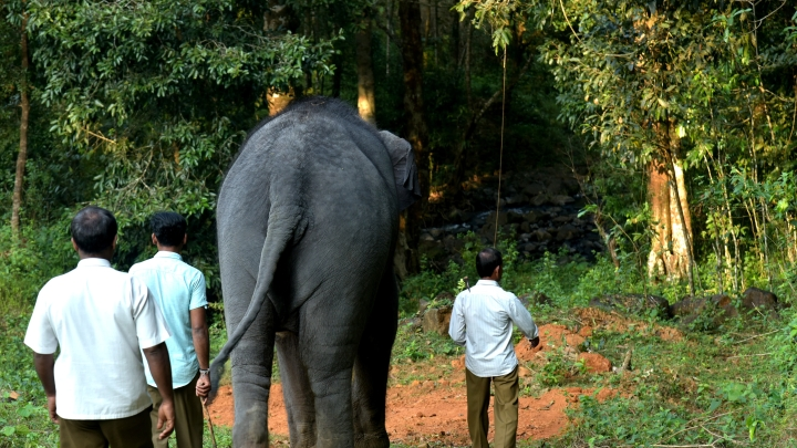 A Day With A Temple Elephant