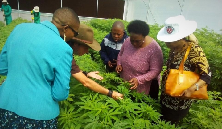 Lesotho Becomes First African Country To Legalise Cannabis Cultivation
