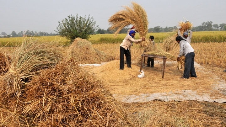 Foodgrain Production Set To Hit A Record High Of 277.5 Million Tonnes In 2017-18