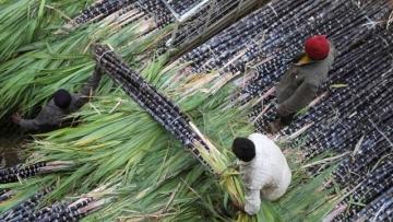 Yogi Sarkar's Power Push Sweetens Uttar Pradesh's Sugar Bowl