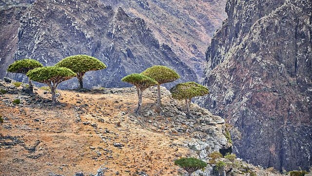Socotra: The Deep Indic Roots Of One Of The Remotest Places On Earth
