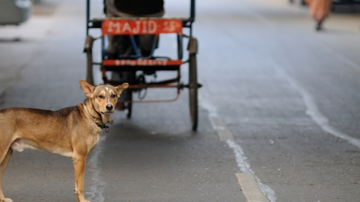 Dogs Turn Deadly In UP's Sitapur: Are Closed Slaughterhouses Really To Blame?