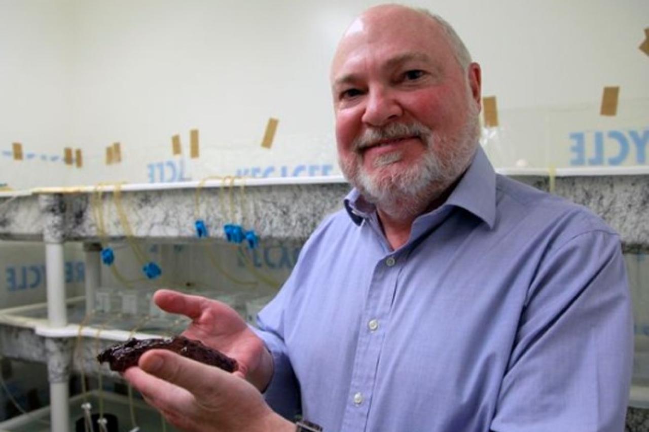 Dr David Glanzman (courtesy: ucla.edu) ... transferring memory between snails.
