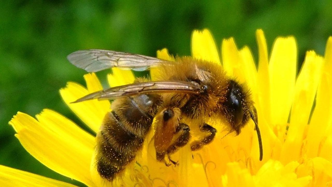 Honey Bees Understand The Concept Of Zero