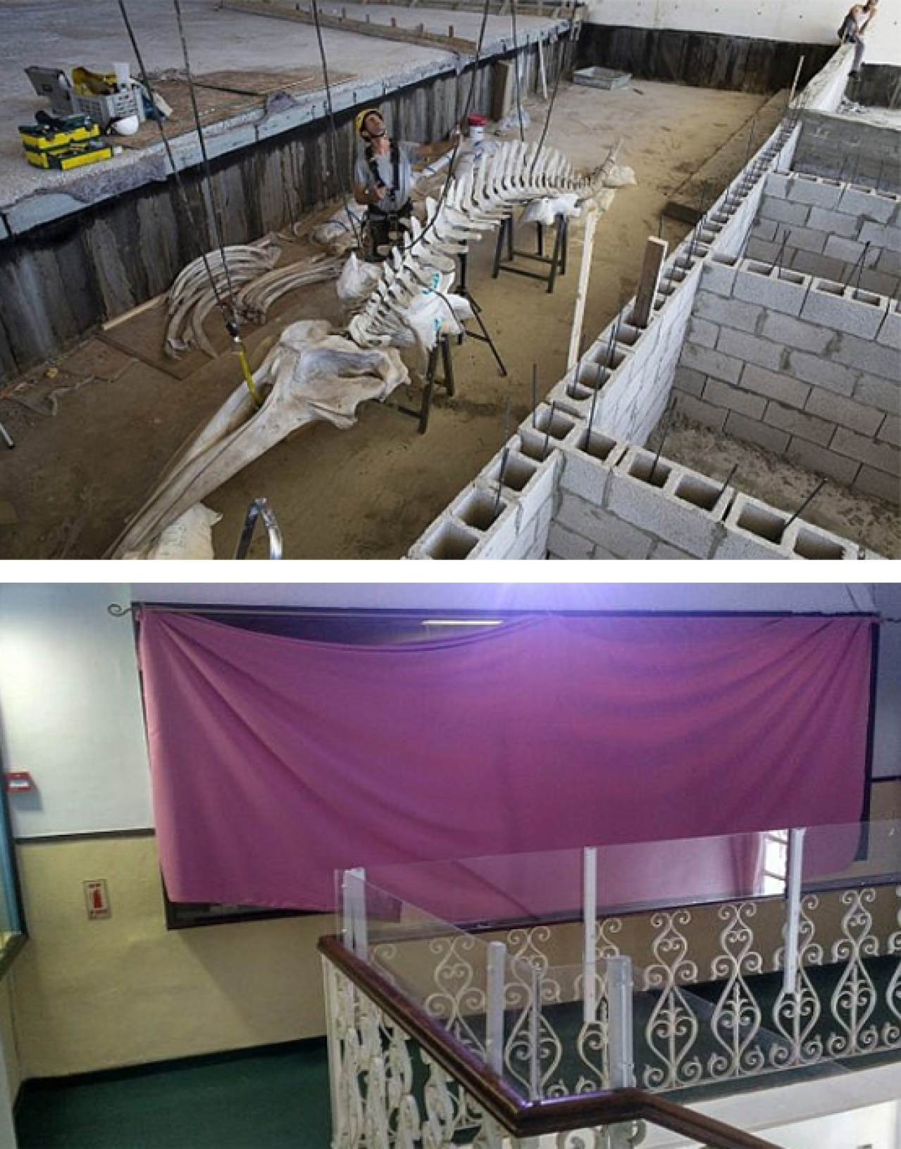 (Top) Work in progress at the Steinhardt Museum of Natural History in Tel Aviv: Whale skeleton replica getting prepared. (Bottom) Science under veil: Exhibit on human evolution kept under shroud at the Biblical Museum of Natural History, Beit Shemesh,Jerusalem.  Pictures Courtesy: 'Times of Israel'