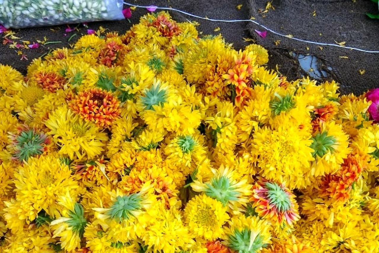 A<i> Navrang</i> flower heap in the town.