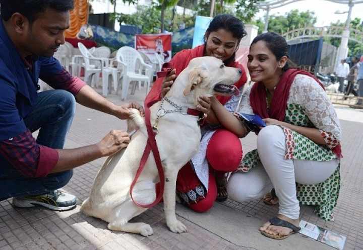 Good News For Bengaluru Dog Owners: Controversial BBMP Law Withdrawn