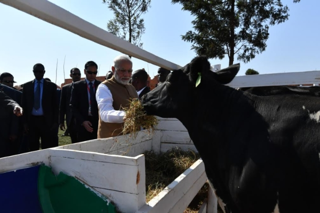 Why Modi's Gift Of Cows To Rwanda Was Very Significant