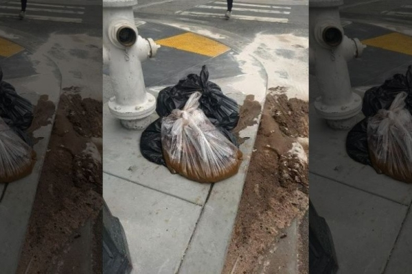 Swachh San Francisco? City Forms 'Poop Patrol' To Combat Open Defecation