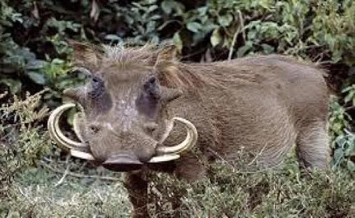 खेत में काम कर रहे किसान पर जंगली सूअर ने किया जानलेवा हमला, हुई मौत