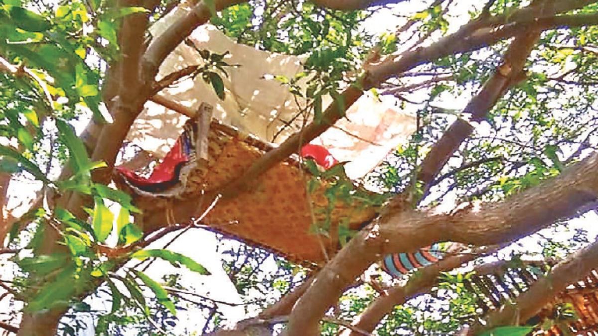 Coronavirus Impact: ...जब चेन्नई से लौटे सात श्रमिकों ने गांव के बाहर पेड़ पर बनायी Quarantine unit, वहीं रहेंगे 14 दिन