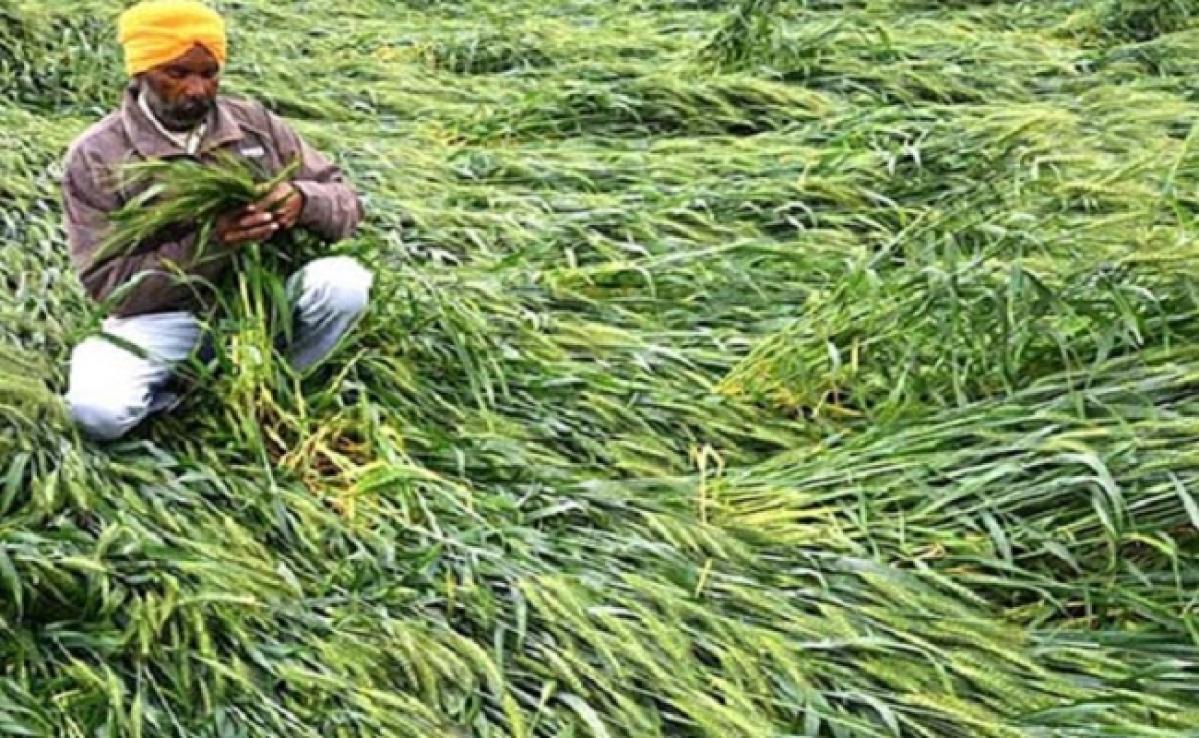 बारिश ने किसानों की बढ़ायी चिंता, तेलहन और गेहूं की फसल हो गया बर्बाद