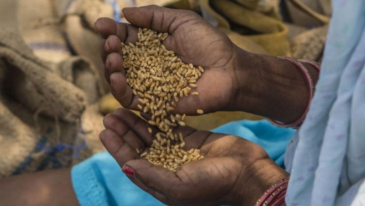 कोरोना से जंग : राज्य में आवश्यक वस्तुओं की कमी नहीं गेहूं और आटा का स्टॉक भी है पर्याप्त