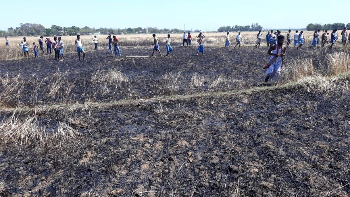 पाकुड़ में ट्रांसफॉर्मर से निकली चिंगारी से खेत में लगी 1.5 टन गेहूं की फसल जलकर खाक
