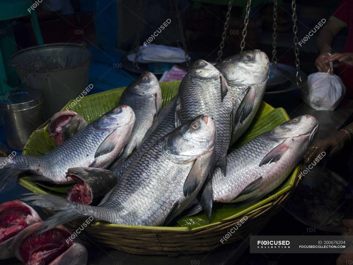 कोरोना का असर : बंगाल में अब ऑनलाइन मंगाइये कच्ची मछलियां, सरकार ने शुरू की सुविधा