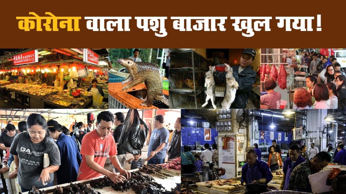कोरोना वाला पशु बाजार खुल गया!