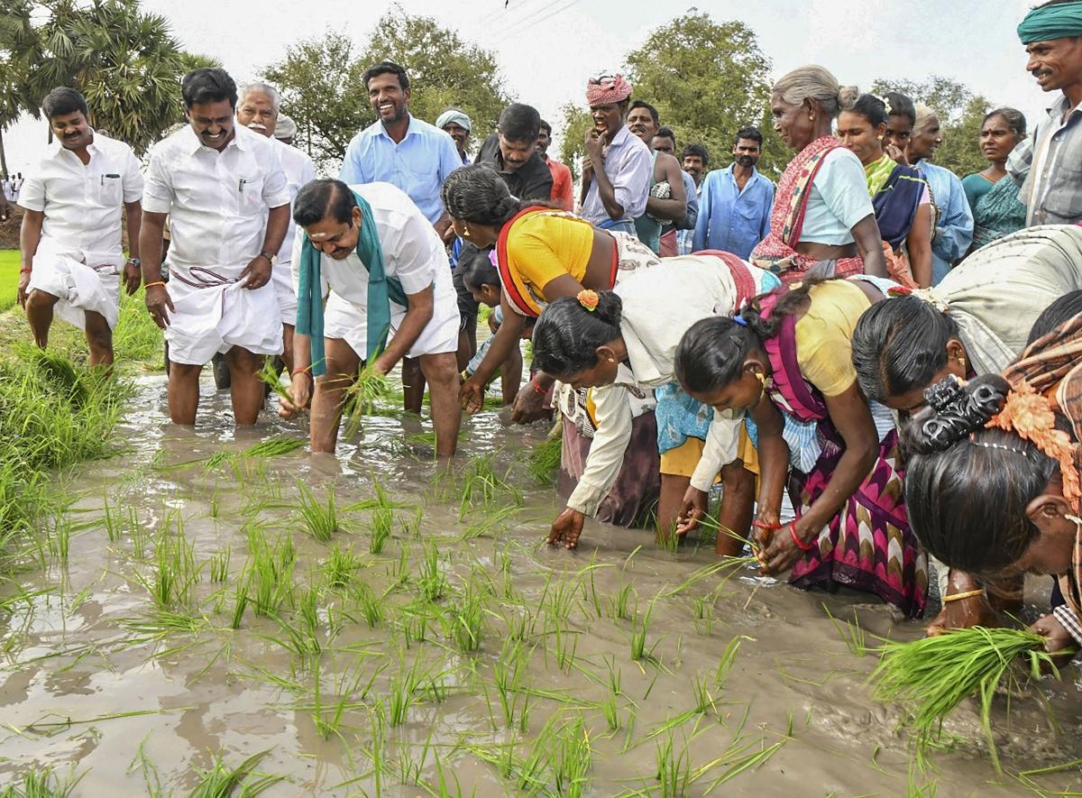 मुख्यमंत्री पलानीस्वामी के इस प्रकार खेतों में किसानों के साथ धान की रोपाई करते देख लोग भौंचक रह गए.