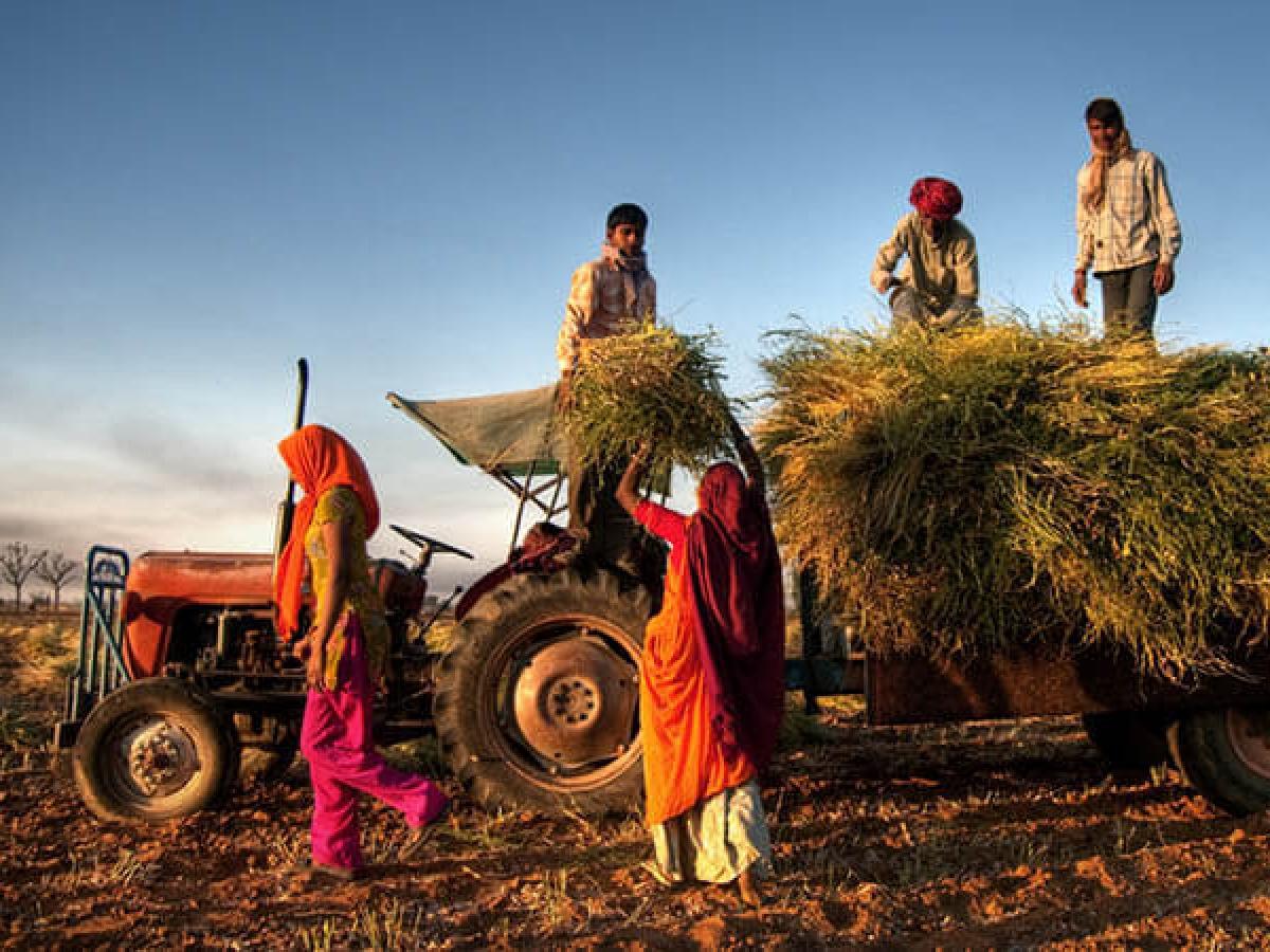 कोरोना लॉकडाउन के बीच किसान करें खेती-बाड़ी, सरकार ने कृषि से जुड़े कार्यों की दी छूट