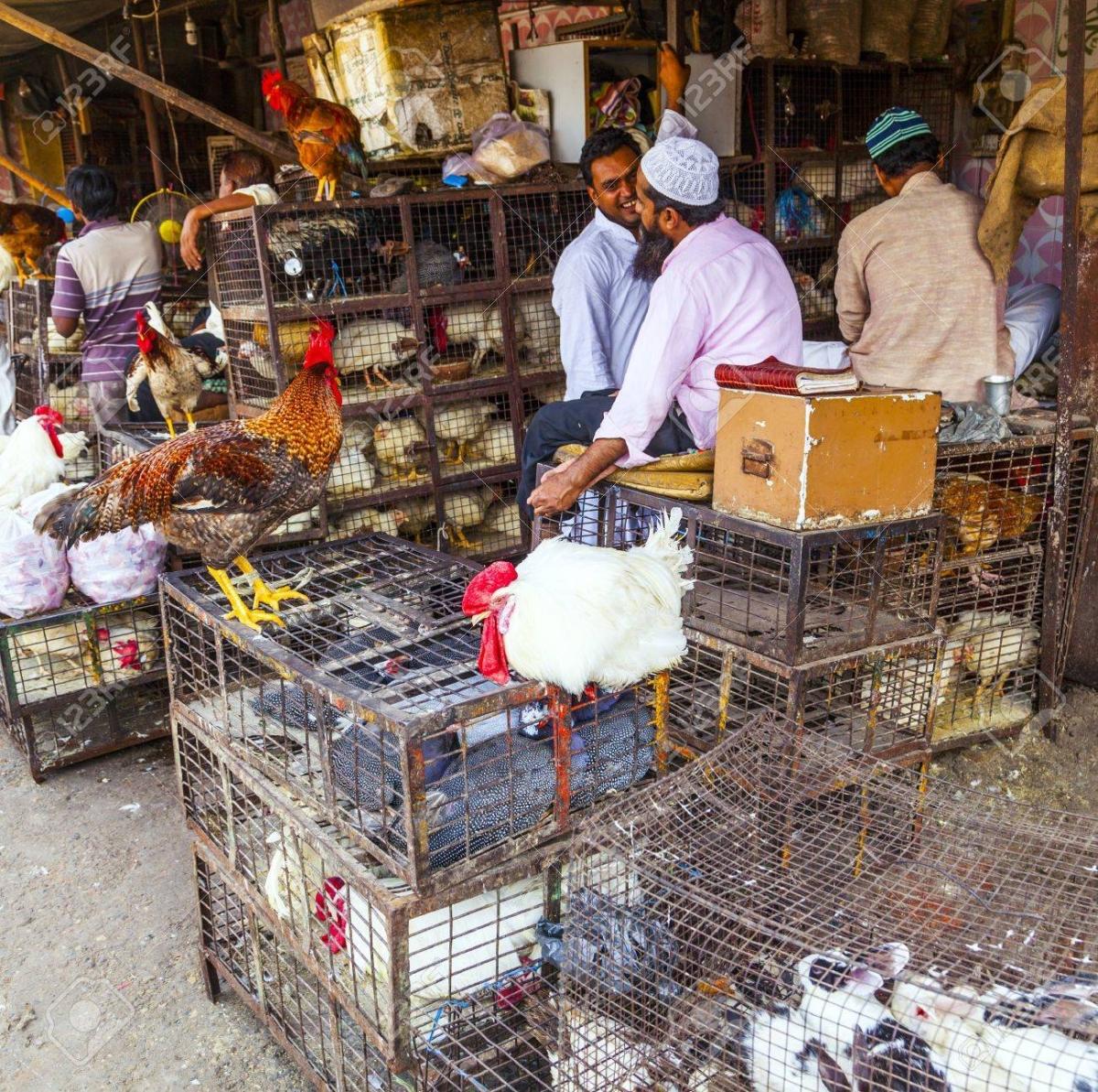 कोरोना : 100 में चार मुर्गियां, फिर भी खरीदार नहीं