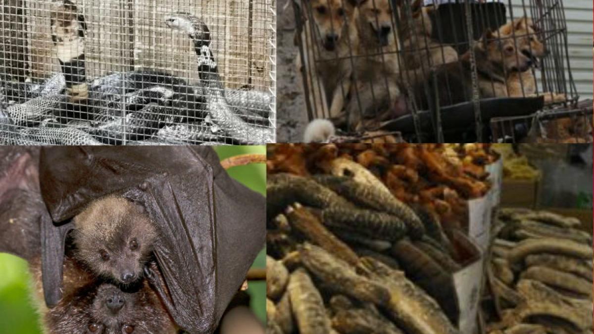 CORONA से सबक नहीं, चीन में फिर बिकने लगे सांप, कुत्ते, बिल्ली, चमगादड़
