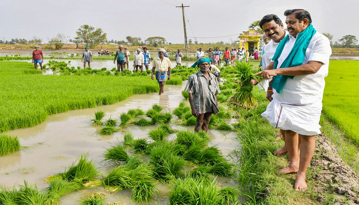 तमिलनाडु के मुख्यमंत्री एडप्पादी के पलानीस्वामी ने किसानों के साथ सूबे के एक गांव में धान रोपाई की.
