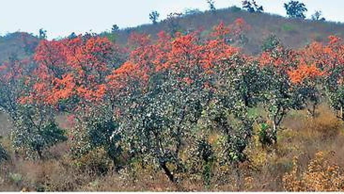 लाह की खेती के लिए गिनीज बुक में दर्ज हो चुका है लातेहार का नाम, सांसद ने लोकसभा में कहा, खेती का दर्जा मिले