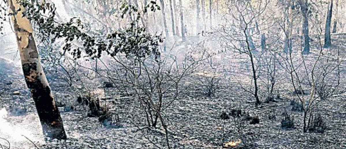 अजूबा : बड़कागांव के सूर्य मंदिर स्थित तीन-चार पेड़ों से निकल रहे हैं धुएं