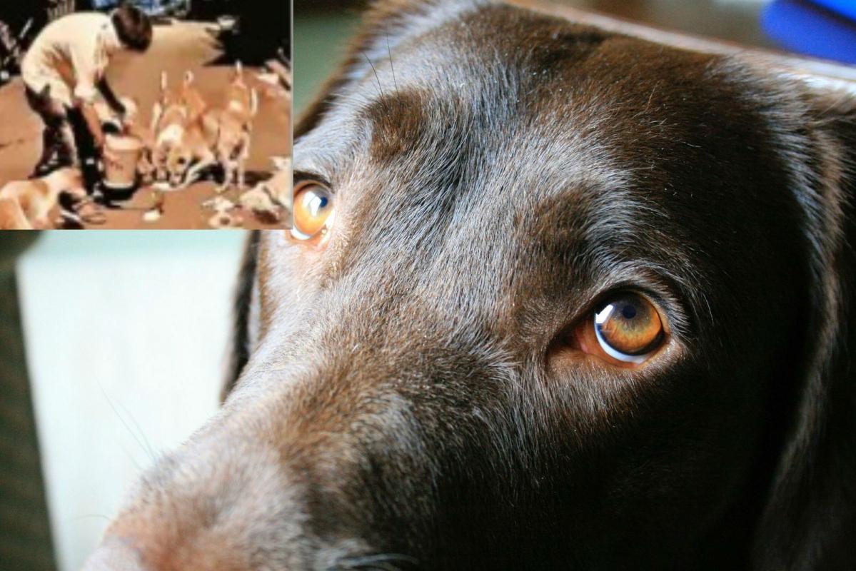 Lockdown in Bengal : मीट शॉप पर लगे ताले, कुत्तों को खाने के लाले, बंगाल का हाल आप भी जानें