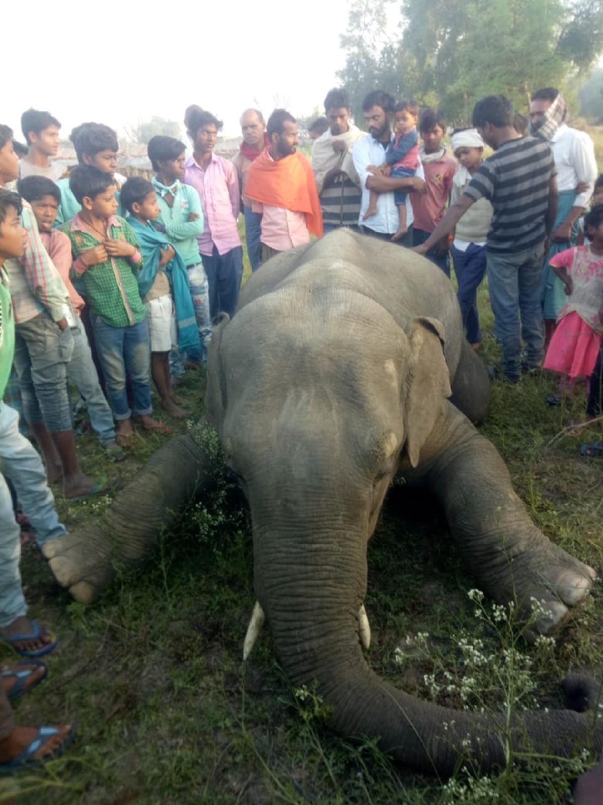 झारखंड में लॉकडाउन के दौरान करंट लगने से हाथी की मौत