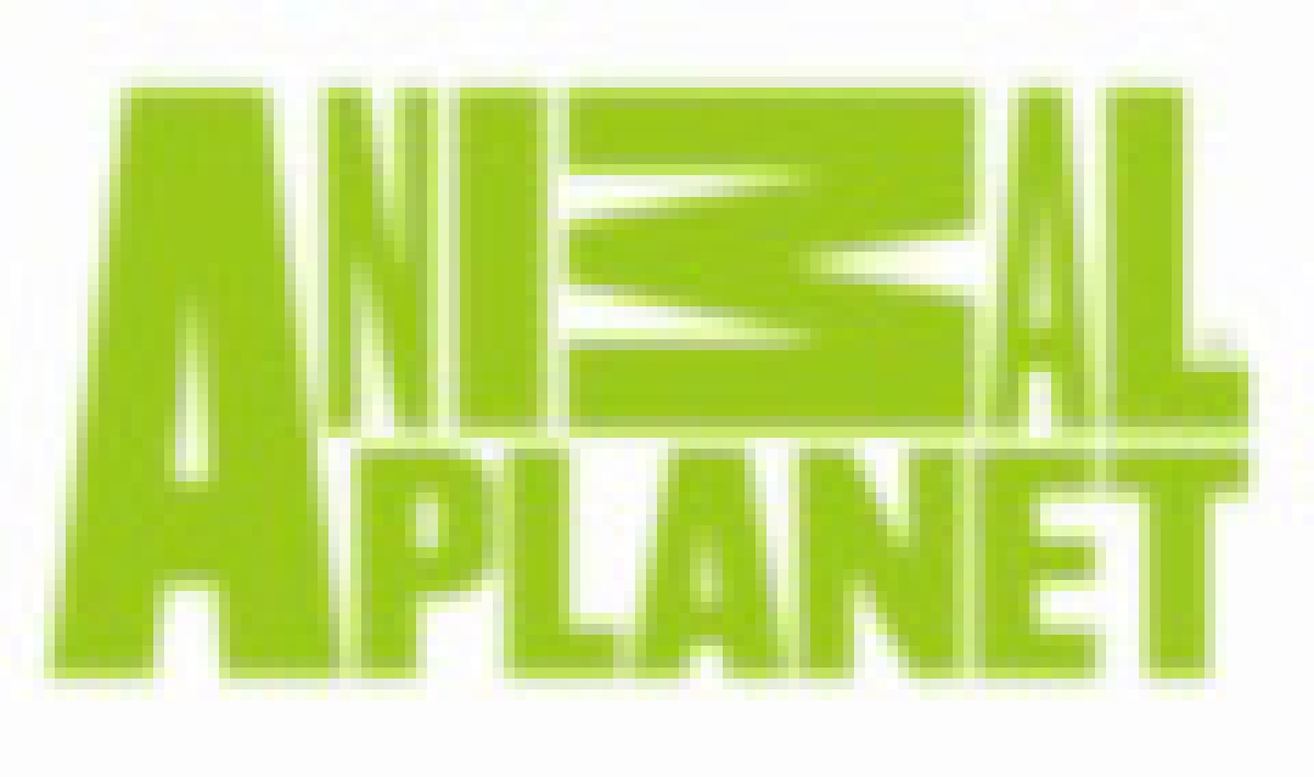 Animal Planet launches a brand new identity