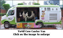 YoMil Cow canter vans