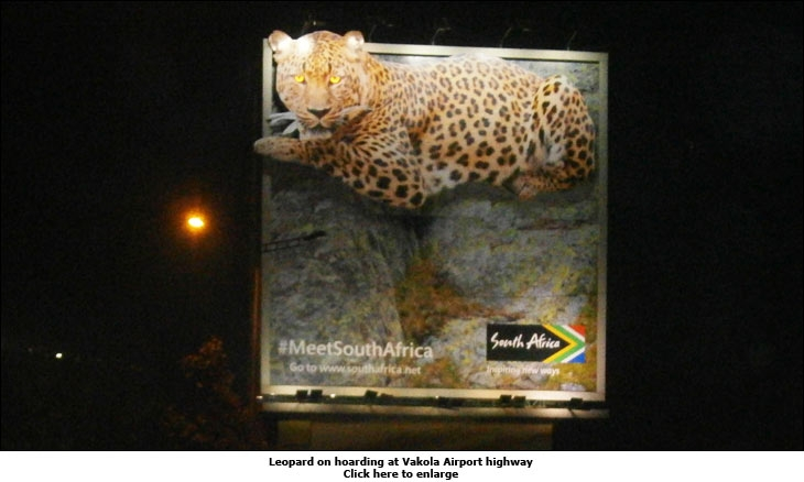 Leopard on hoarding at Vakola Airport highway