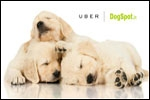 Uber treats Delhiites to puppy love