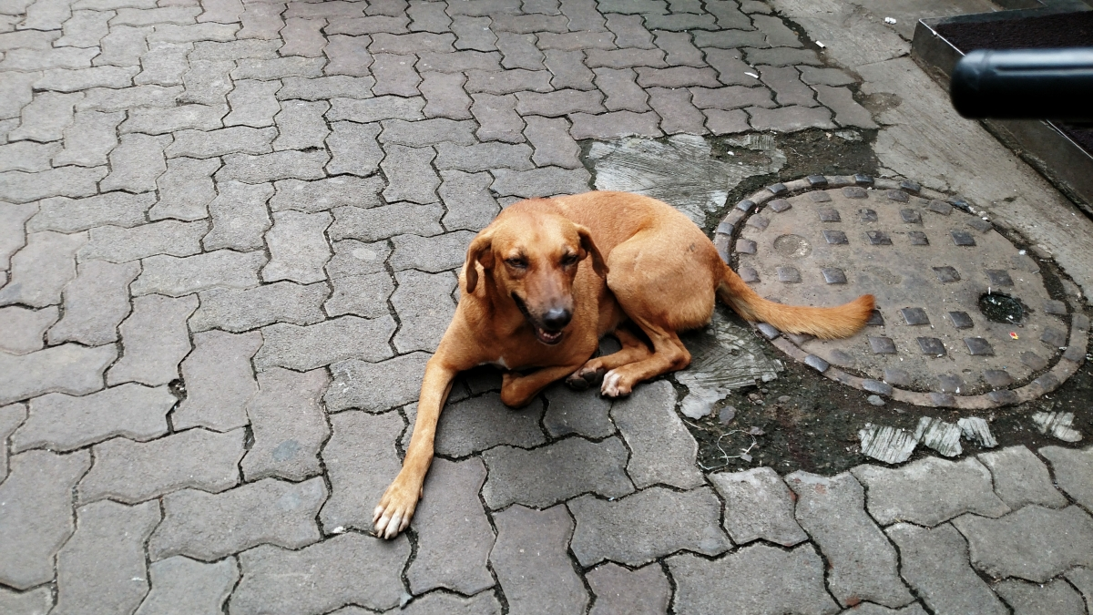 Animal Welfare Board approaches Supreme Court against Kerala dog culling