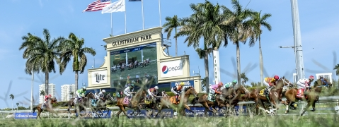 Turf racing at Gulfstream Park.