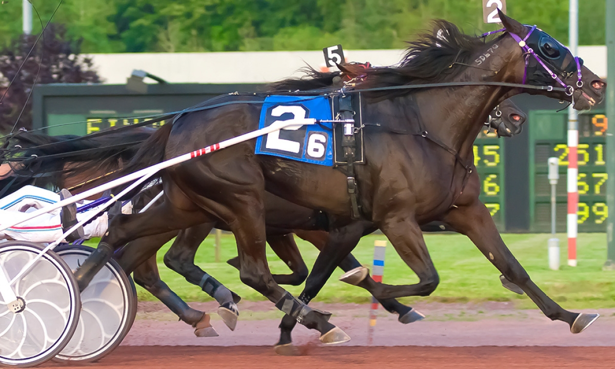 Harness Racing: Alan Mitchell picks a 10-race card for Saturday