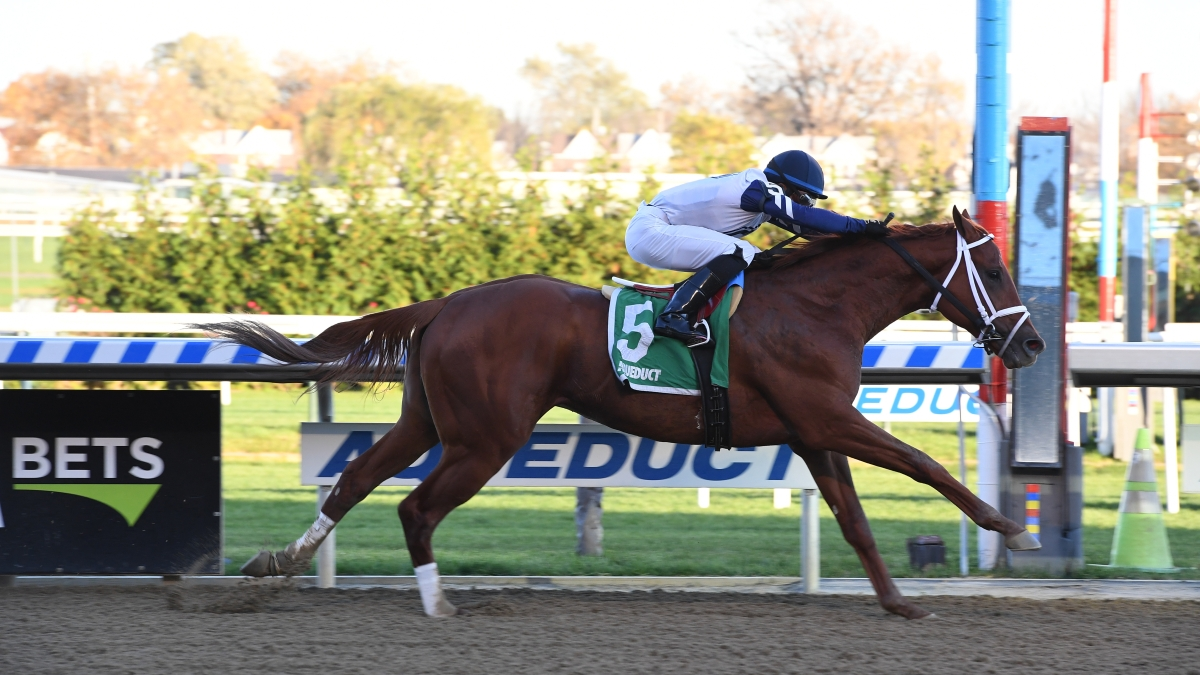 Vekoma won the Nashua at Aqueduct in November, 2019