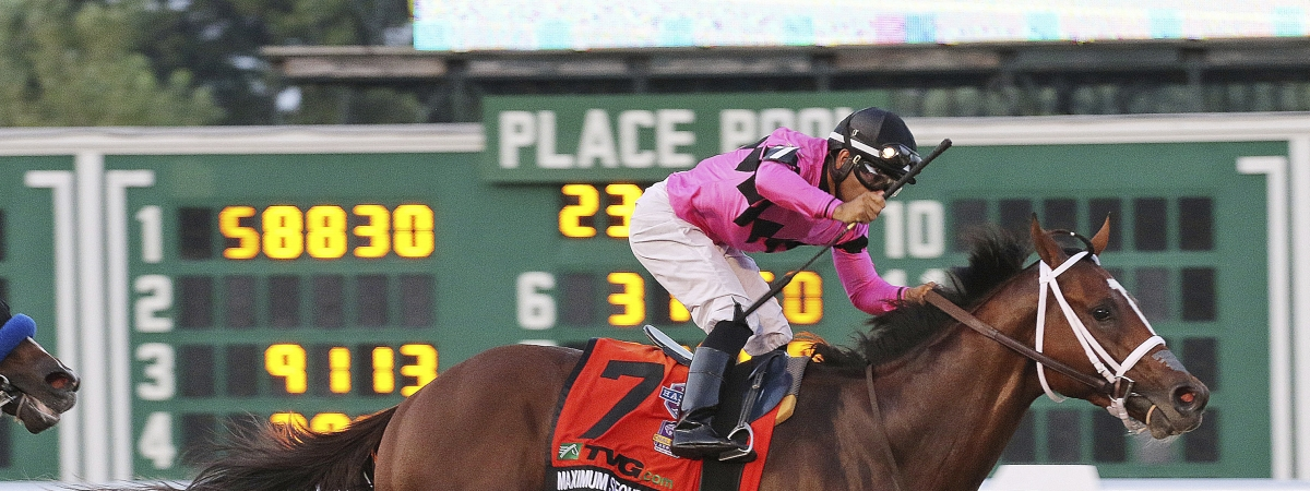 Maximum Security, who won the $1,000,000 TVG.com Haskell Invitational in July, is racing in the $20 million Saudi Cup. (Ryan Denver/EQUI-PHOTO, Inc. via AP)
